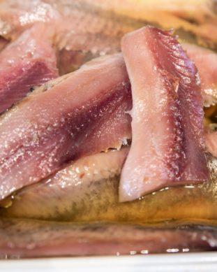 דג מטיאס